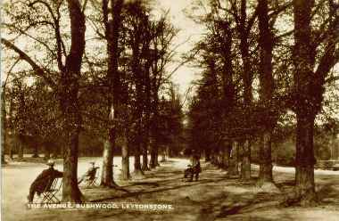 Bush Wood, the Avenue