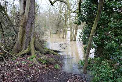 The River Roding floods into in Wanstead Park